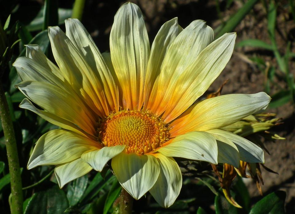 Nature, Plant, Summer, Flower, Leaf, Closeup, Garden