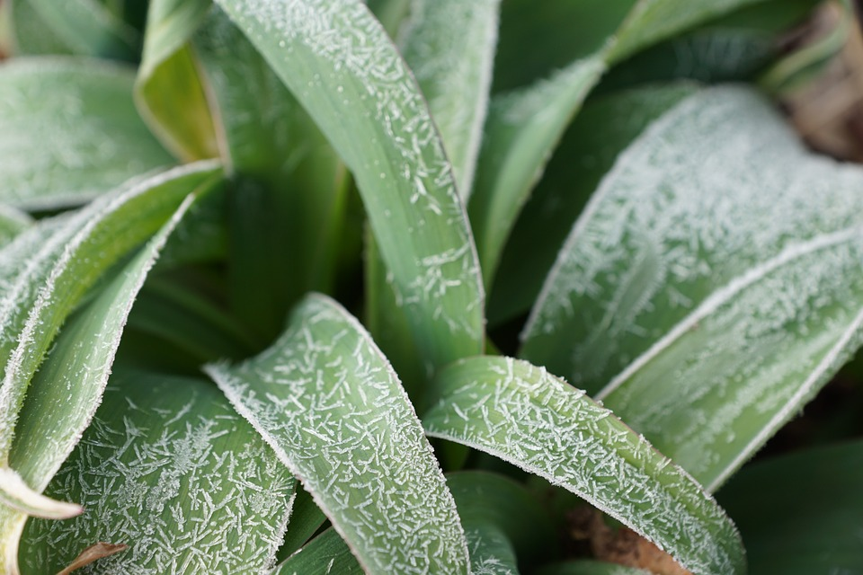 Grass, Green, Plant, Iced, Spring, Cold, Freeze, Ice