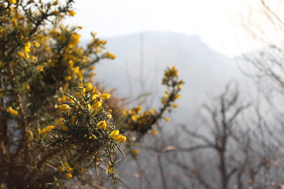 Plant, Flowers, Cold, Mountain, Wood, Flower, Yellow