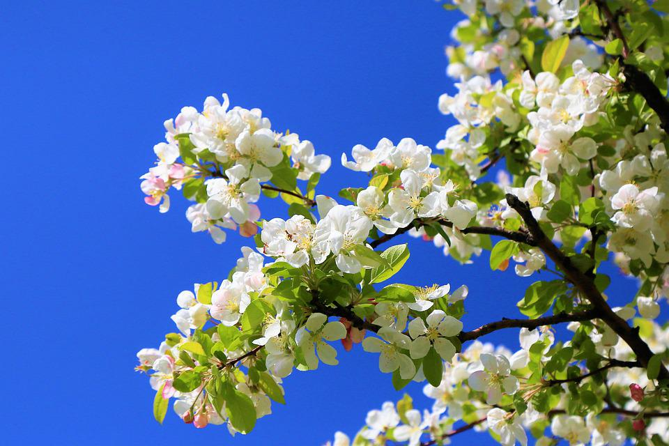 Flowers, Spring, Nature, Plant, Color, Blooming, White