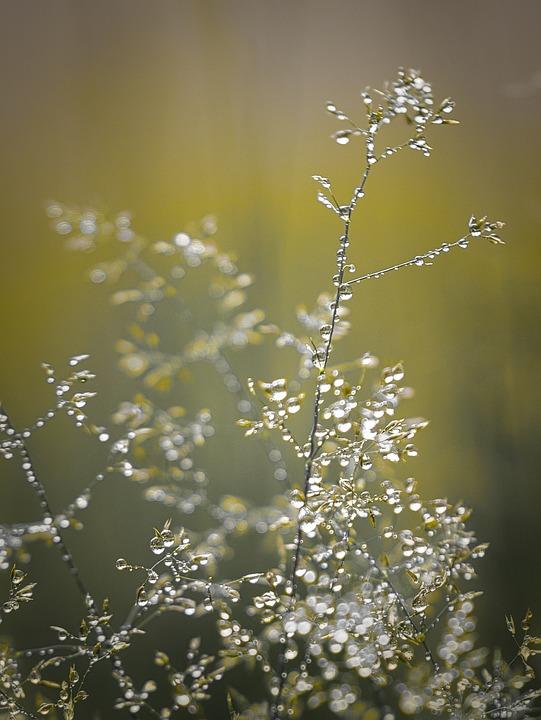 Plant, Dew, Drip, Grass, Light, Tiefenschärfe, Bokeh