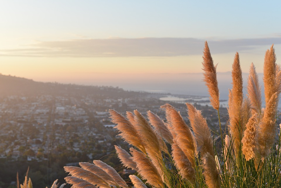 Plant, Grass, Lookout, City, View, Distance, Nature