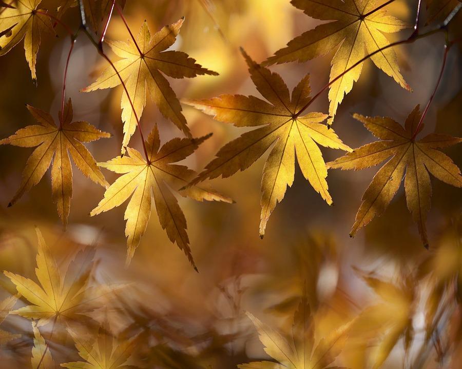 Dried Leaves, Autumn, Leaves, Nature, Plant, Landscape