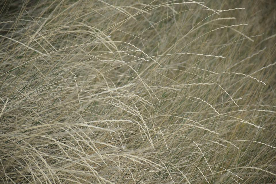 Grass, Dry, Summer, Plant, Nature, Drought, Environment