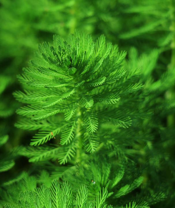 Nature, Leaf, Plant, Environment, Ferns, Close-up