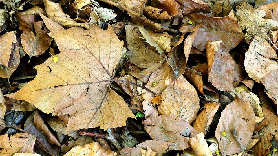 Leaf, Fall, Nature, Tree, Plant, Wood, Forest, Foliage