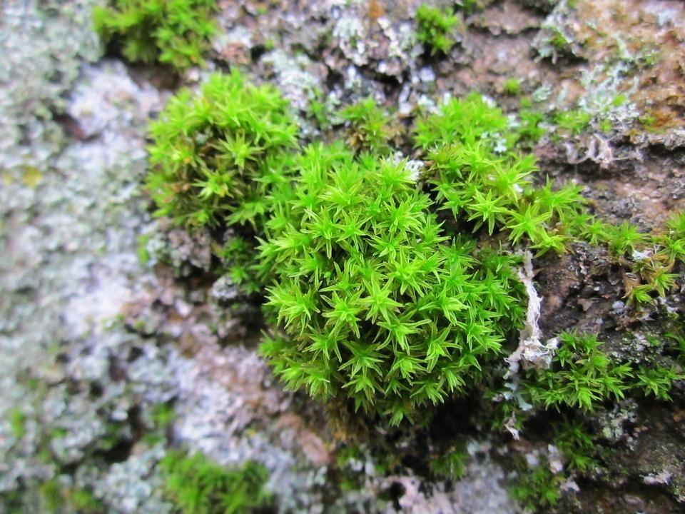 Moss, Flora, Plant, Macro, Fresh, Grow, Environment