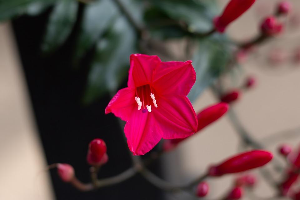 Flower, Flora, Spring, Nature, Garden, Plant, Bloom