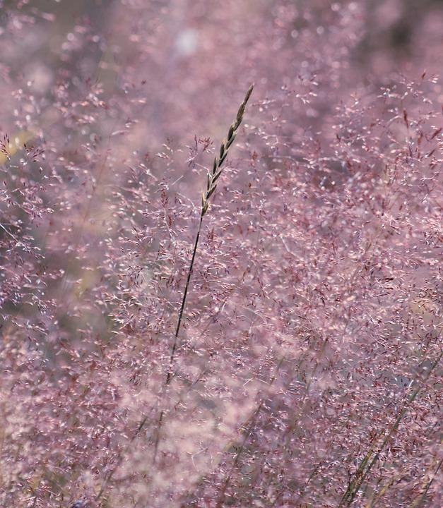Macro, Simple, Nature, Flora, Plant, Yellow, White