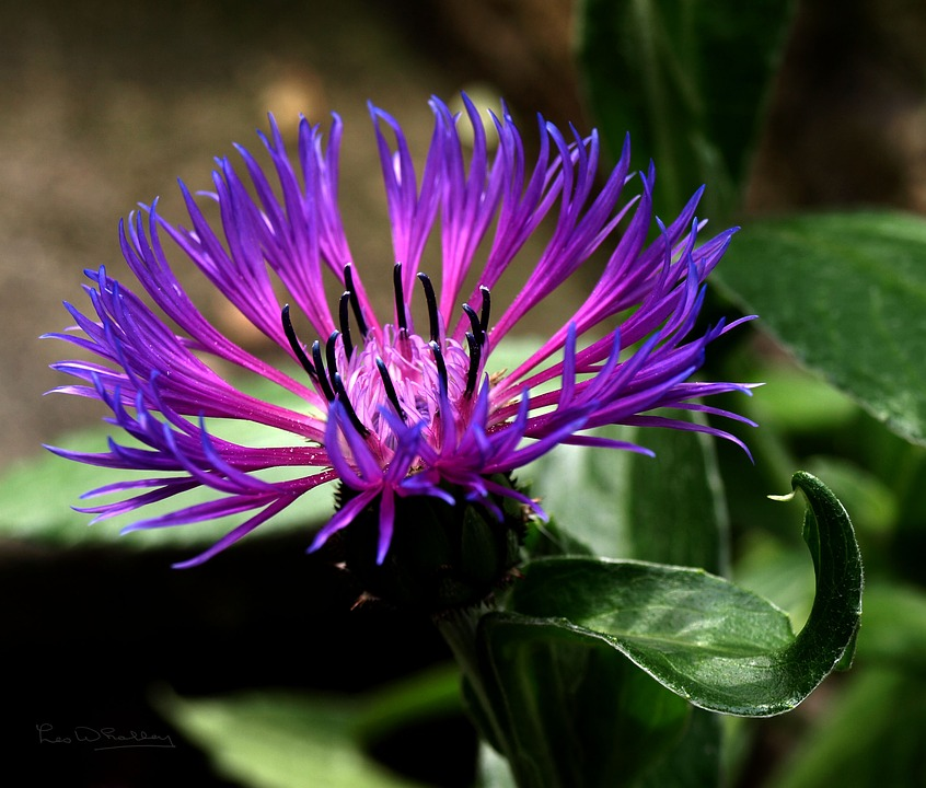Flower, Purple Flower, Floral, Blossom, Plant, Colorful