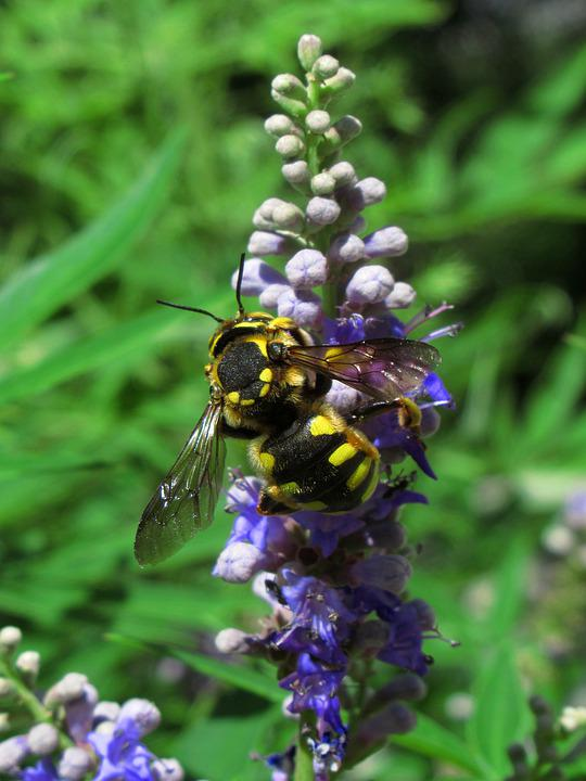 Bee, Insect, Plant, Flower, Pollination