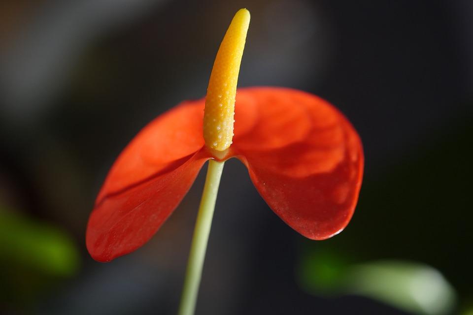 Flower, Plant, Blossom, Bloom, Close Up, Petals, Flora