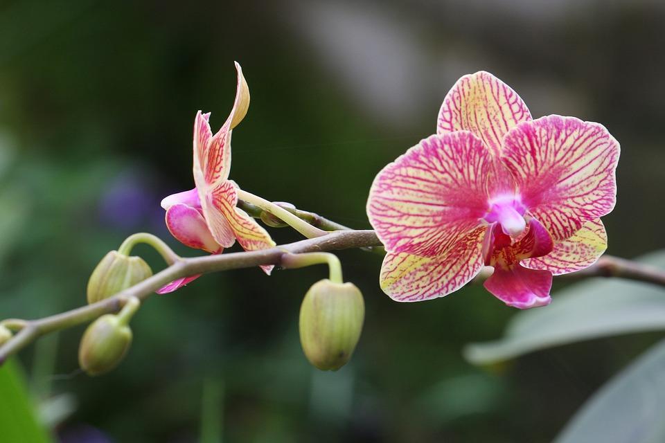 Flower, Bloom, Blossom, Nature, Plant, Botanical