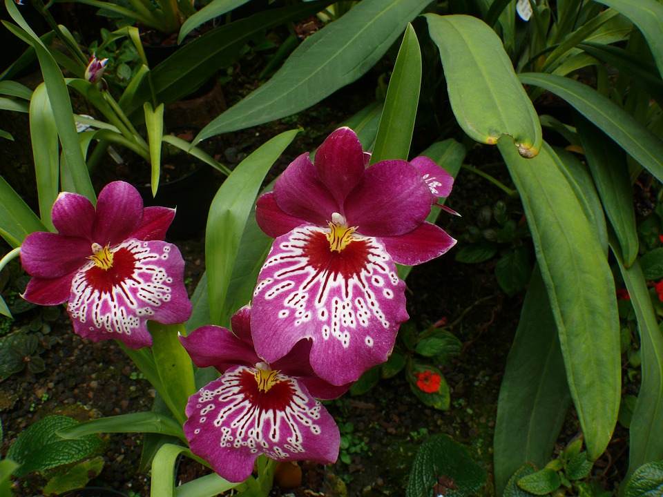 Orchid, Greenhouse, Flower, Blossom, Bloom, Plant