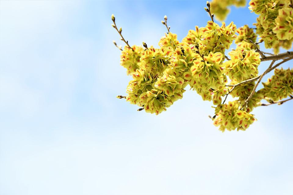 Flower, Nature, Plant, Branch, Tree, Spring