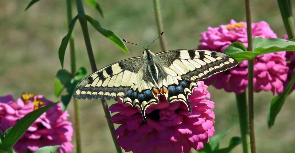 Free photo Plant Flower Butterfly Garden Nature Summer , Max