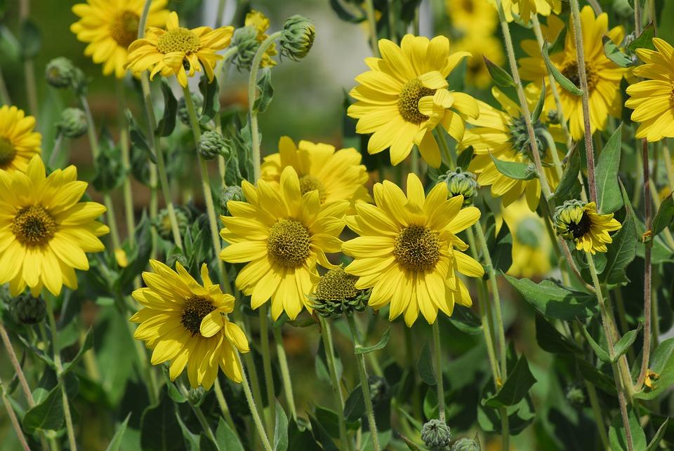 Flower, Plant, Nature, Summer, Field, Garden