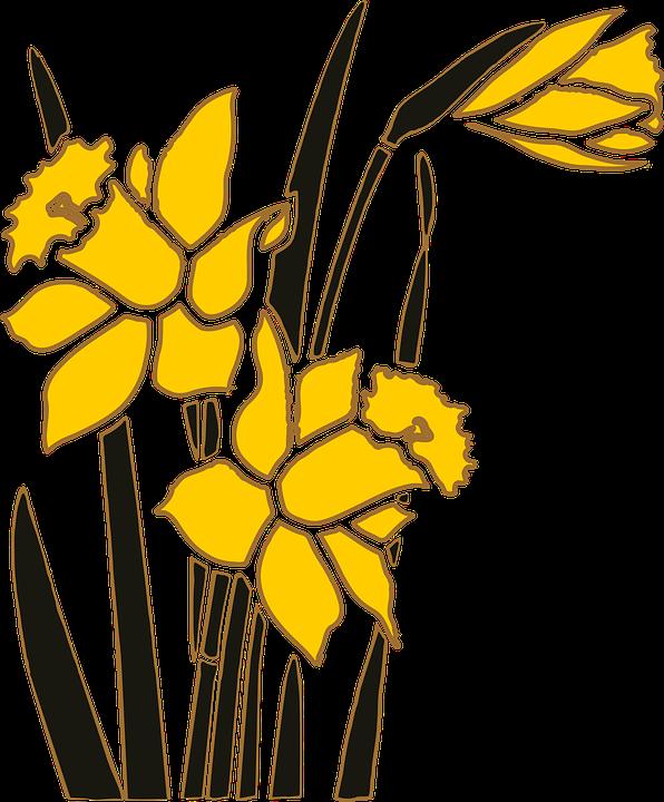 Flower, Garden, Narcissus, Plant