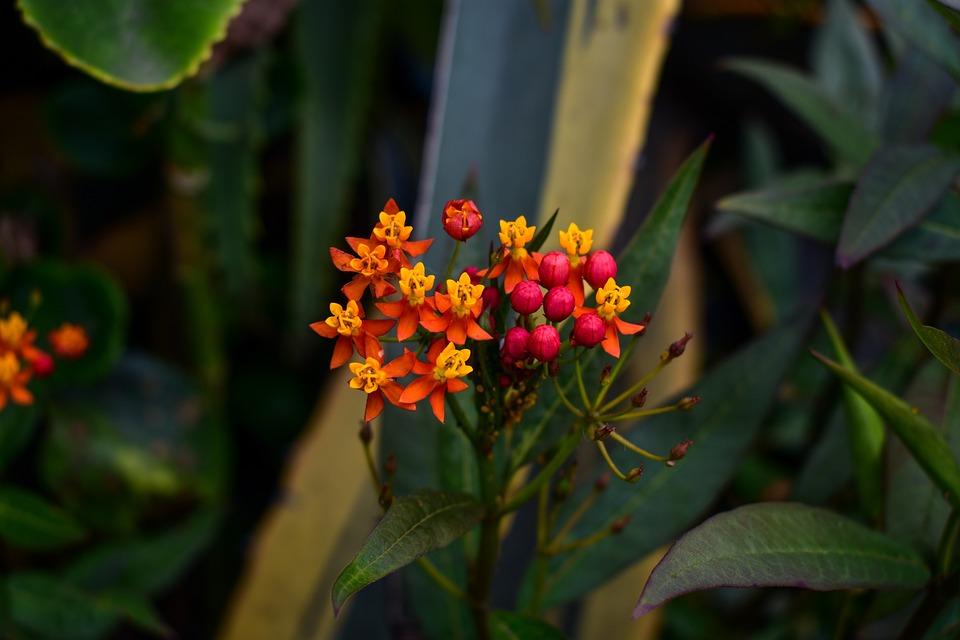Flower, Garden, Plant, Nature