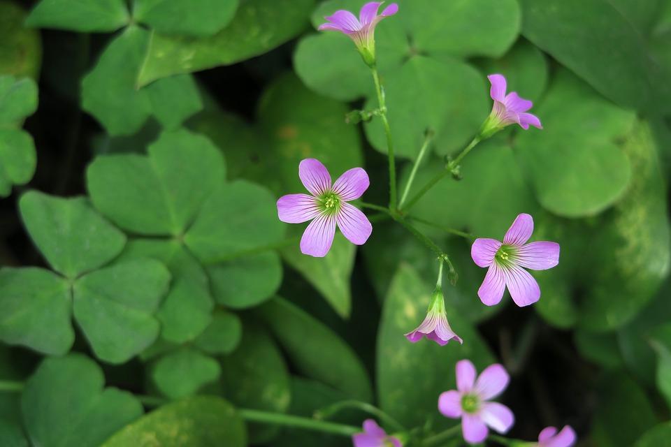 Plant, Flower, Nature, Leaf