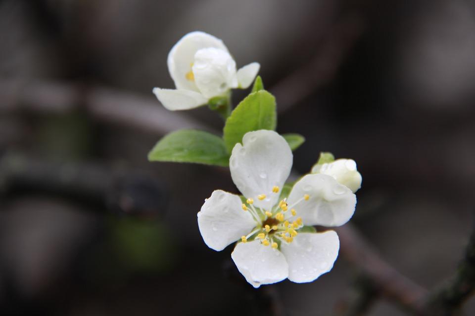 Flower, Nature, Plant, Sheet