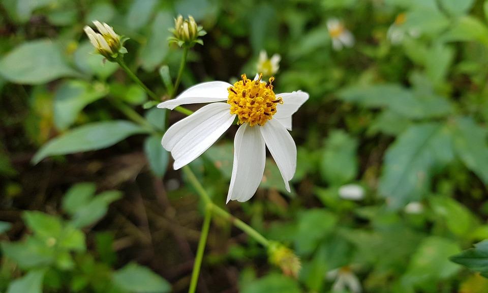 Nature, Summer, Outdoor, Plant, Flower