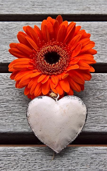 Gerbera, Heart, Flower, Plant, Single Bloom, Orange Red