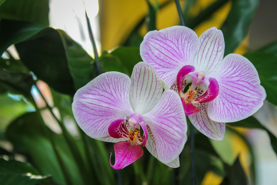 Flower, Orchid, Plant