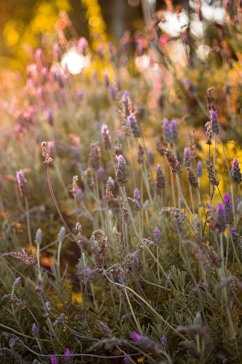 Plant, Flower, Nature, Garden, Flowers, Spring, Purple