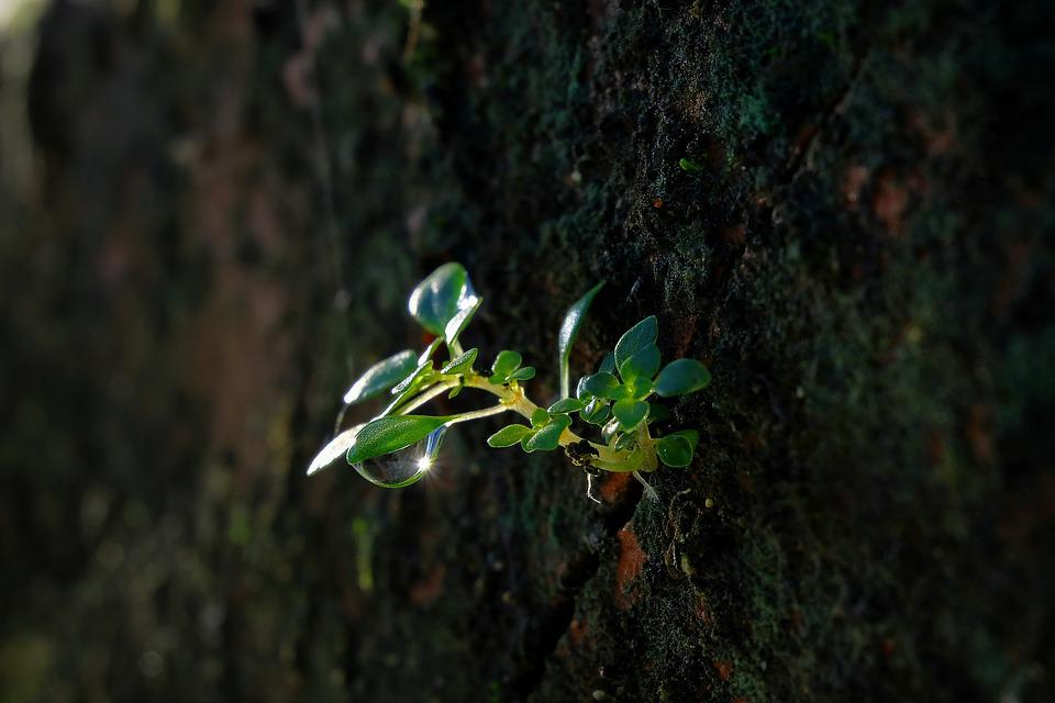 Vietnam, Macro, Fujifilm, Spring, Flower, Summer, Plant