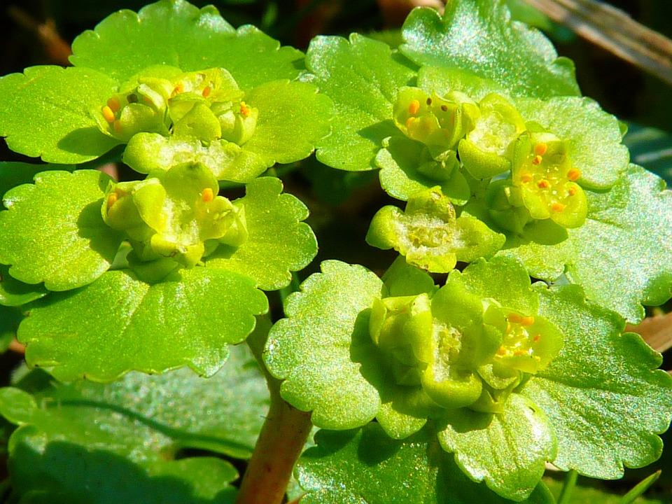 Spurge Family, Green, Flower, Plant