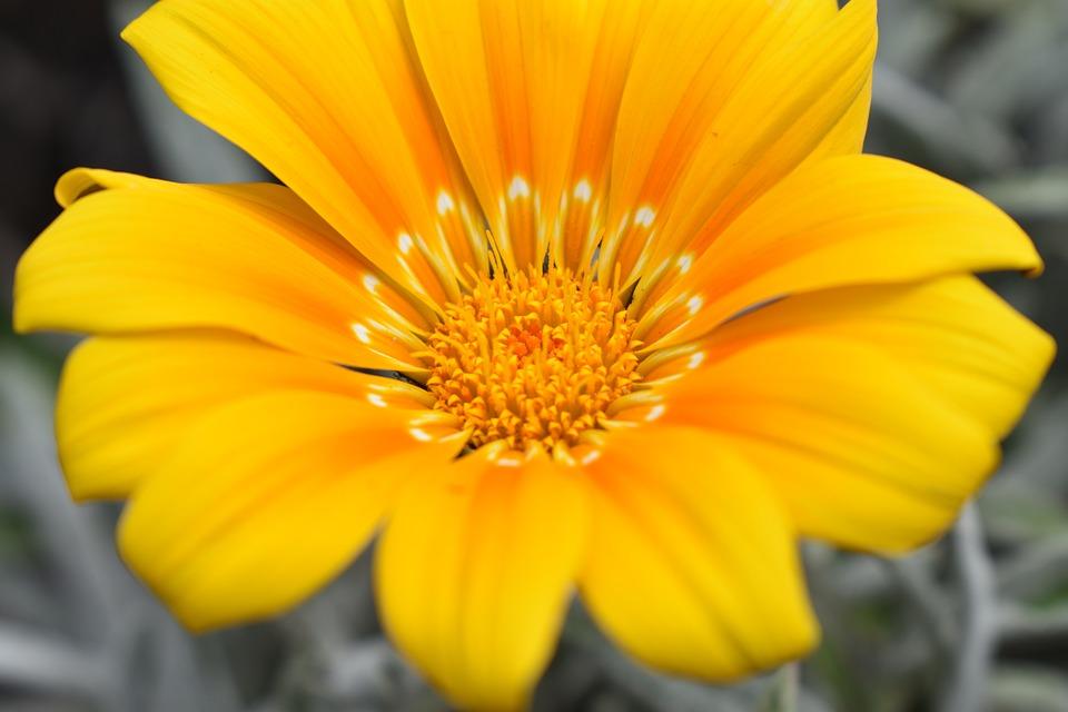 Nature, Plant, Flower, Summer