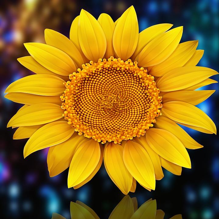 Flower, Plant, Summer, Nature, Petal, Sunflower