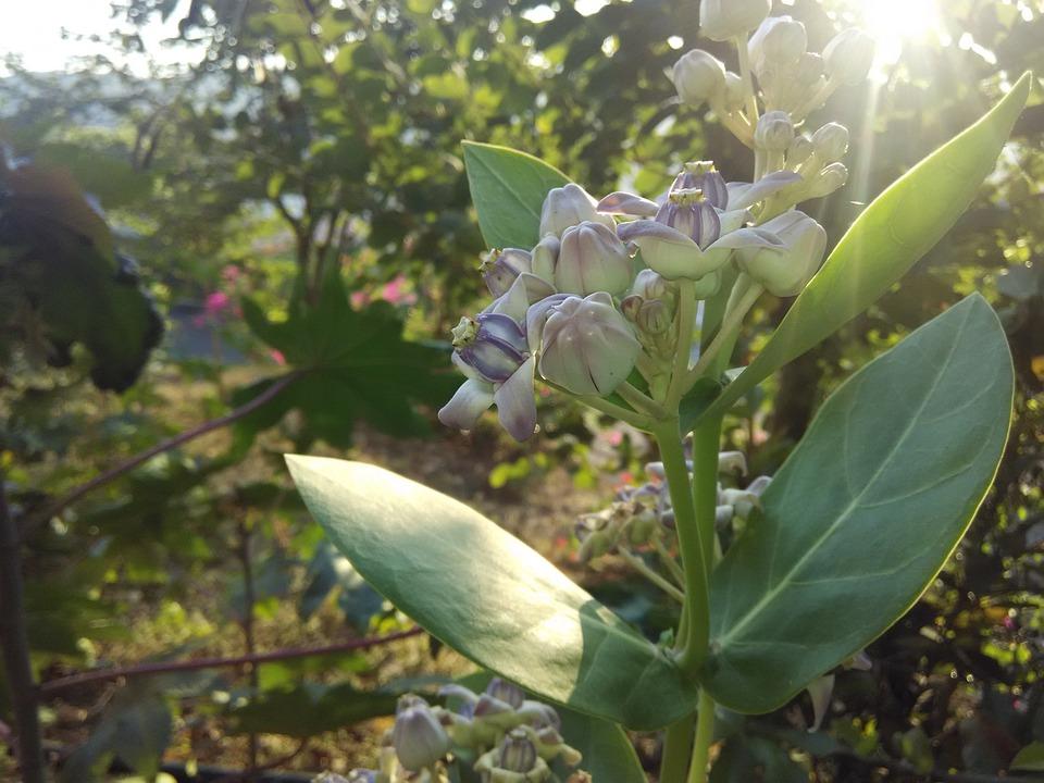 Plant, Flower, Sunshine