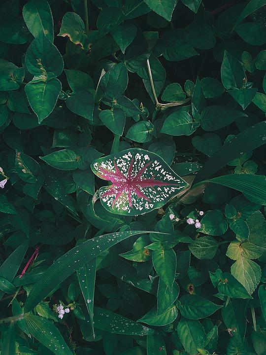 Tanaman, Plant, Flower, Bunga