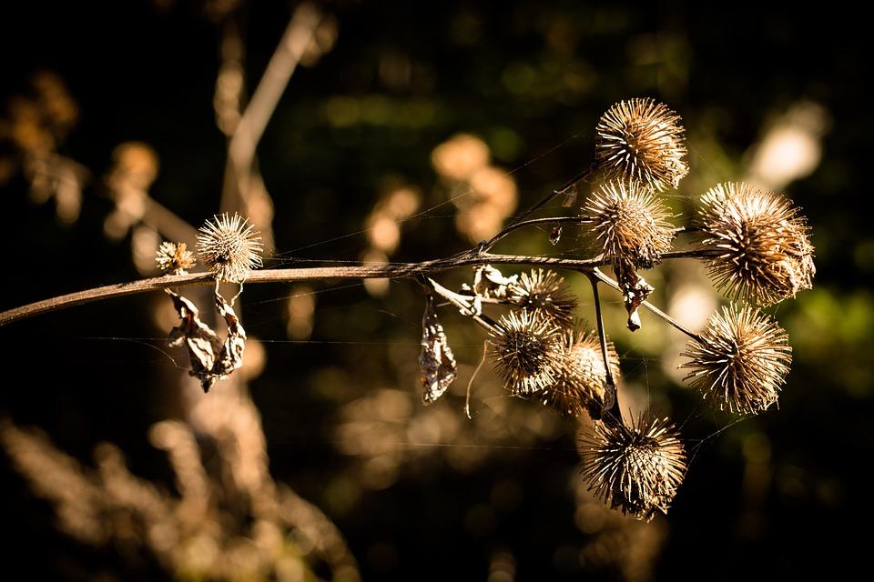 Autumn, Thistle, Nature, Flower, Plant