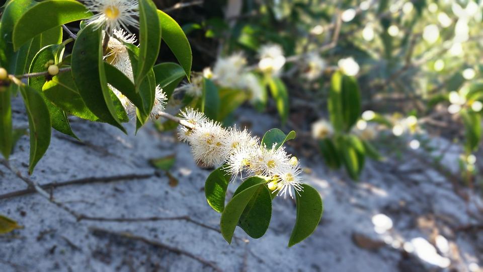 Flower, Green, Mato, Vegetation, Plant