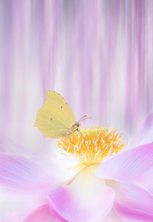 Flower, Summer, Plant, Garden, Lotus, Water Lilly
