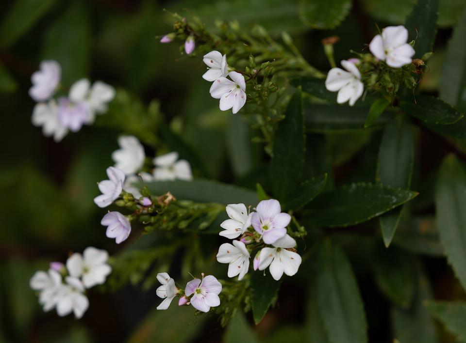 Flower, Plant, White, Garden