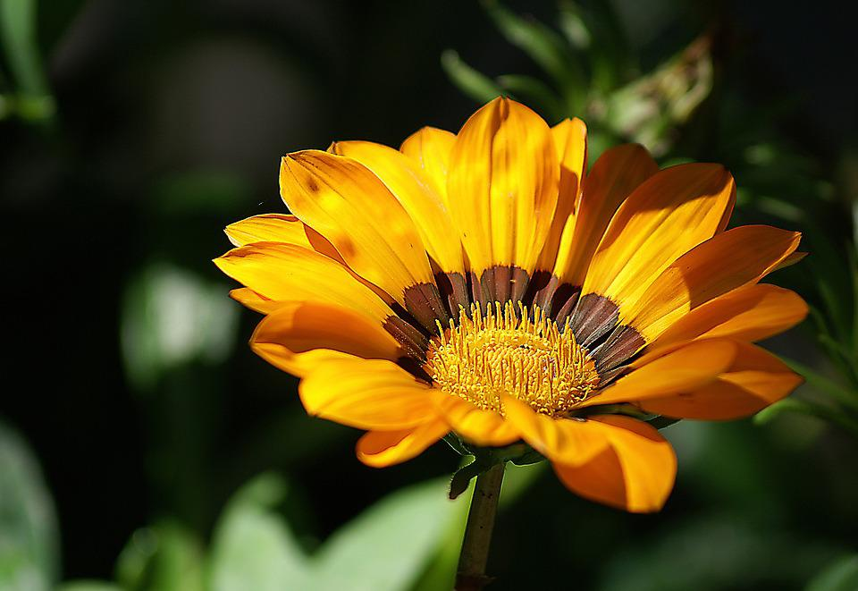 Flower, Yellow Flowers, Plant, Flowering