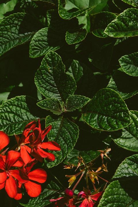 Flowers, Petals, Plant, Leaves, Foliage, Blossom, Bloom