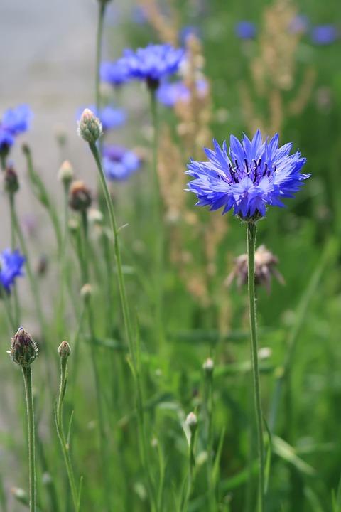 Natural, Flowers, Field, Plant, Summer, Grass, Outdoors