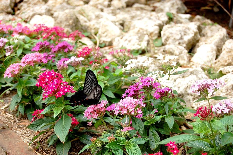 Flowers, Natural, Plant, Leaf, Garden, Pink, Papilio