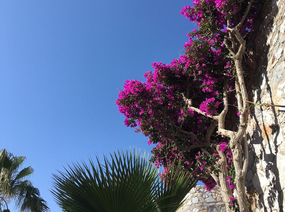Flowers, Crete, Spring, Plant, Greece