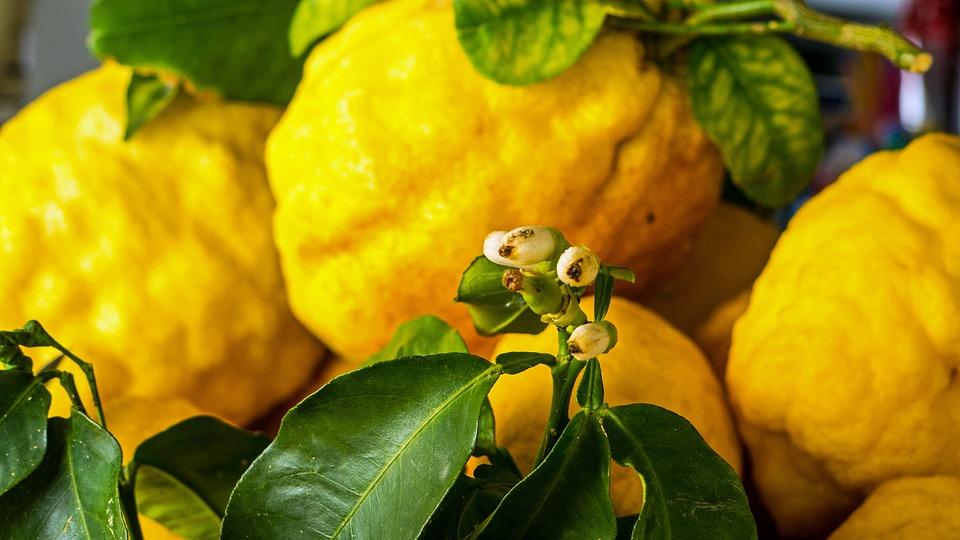 Blossom, Bloom, Lemons, Food, Plant
