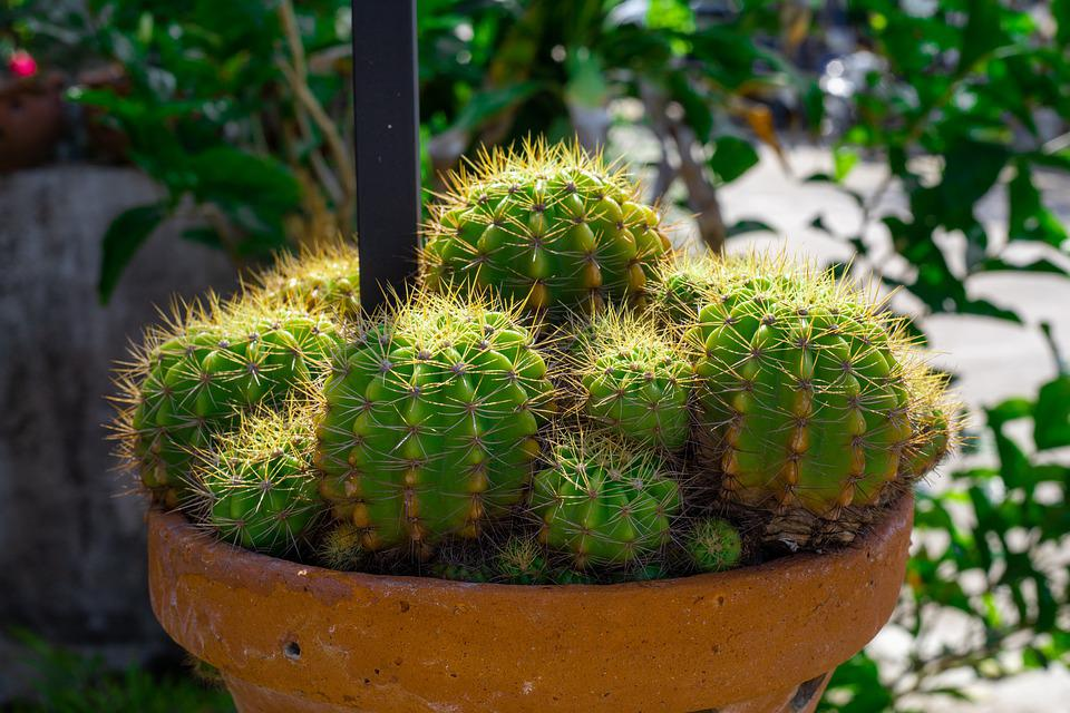 For All Skin Types, Thorns, Cactus, Plant, Nature