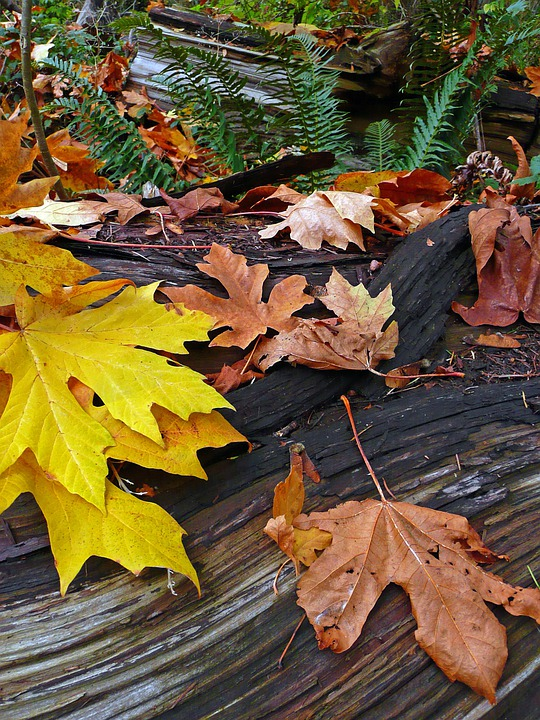 Fall, Autumn, Forest, Plant, Natural, Botanical