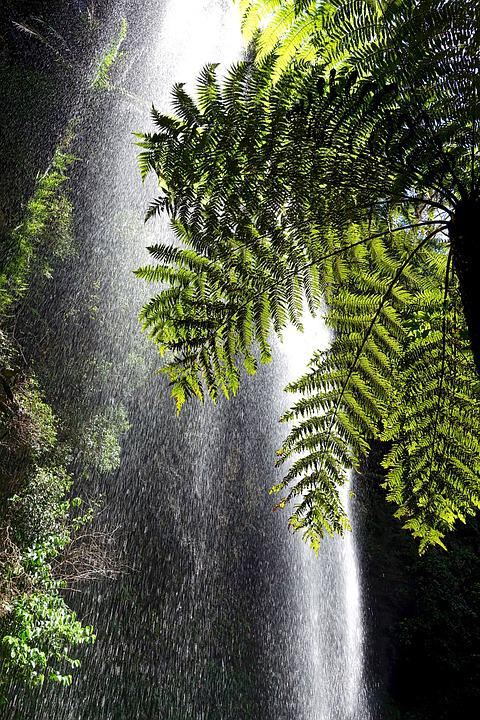 Mist, Plant, Water, Forest Landscape, Natural, Foliage