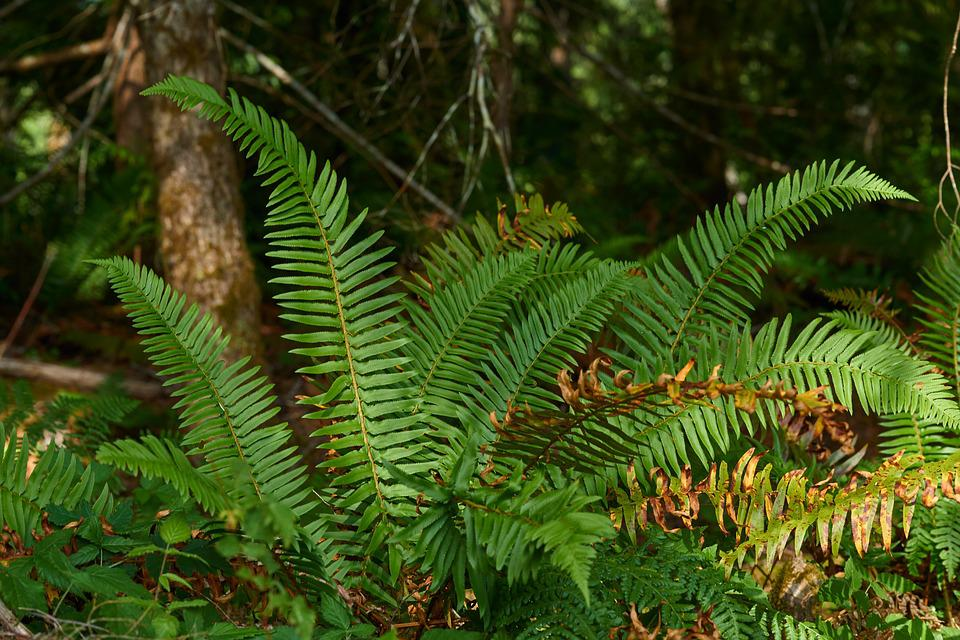 Fern, Forest, Nature, Green, Plant, Lighting