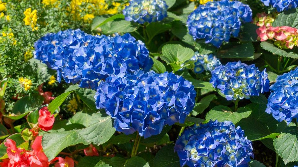 Nature, Flower, Plant, Garden, Summer, Petal, Beautiful